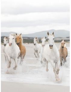 3D фототапет с бели коне-1