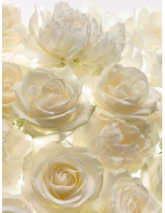 Фототапет с бели рози-1